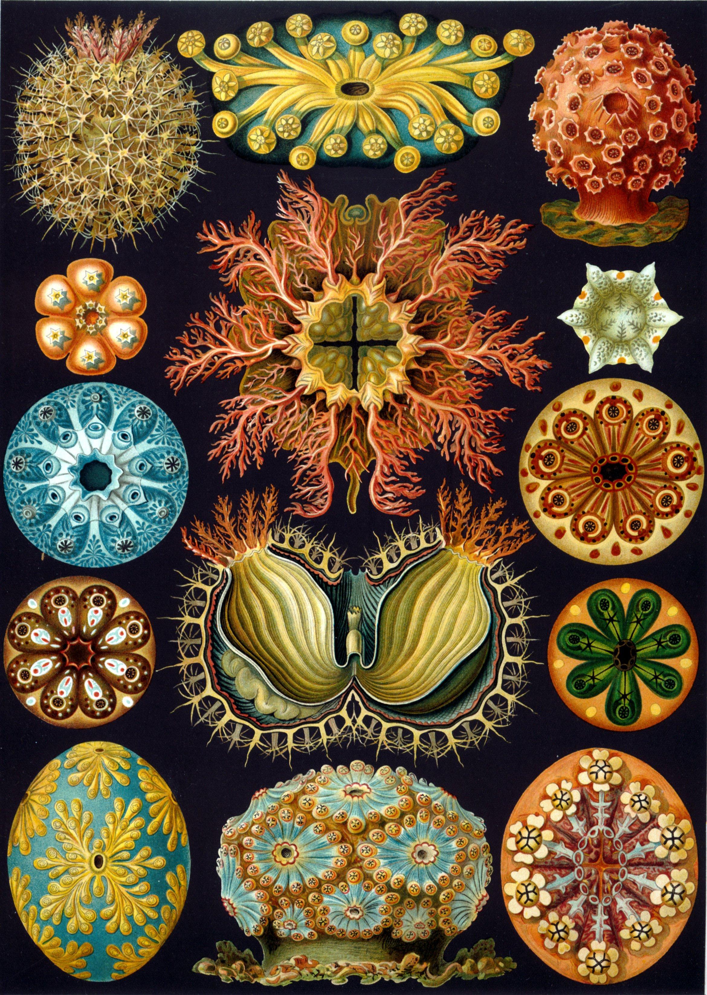 Évolutionnisme et modèles d'interdisciplinarité:  Haeckel, Quinet, Symonds et Spencer