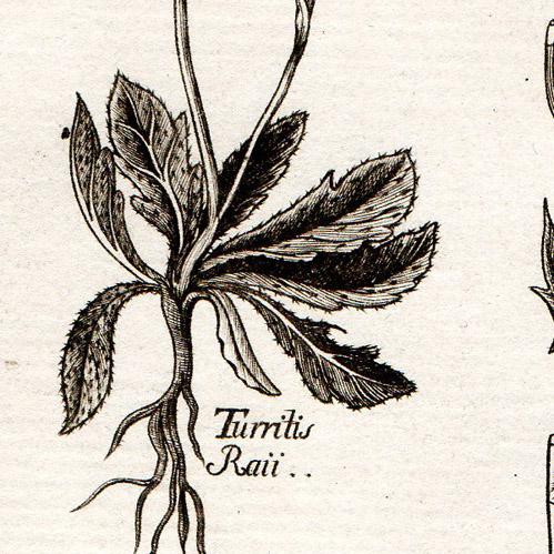 L'obtention végétale au XIXè siècle : fruit du hasard ou de l'industrie ?